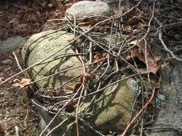 Sticks Found in the Woods