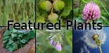 Featured Plants