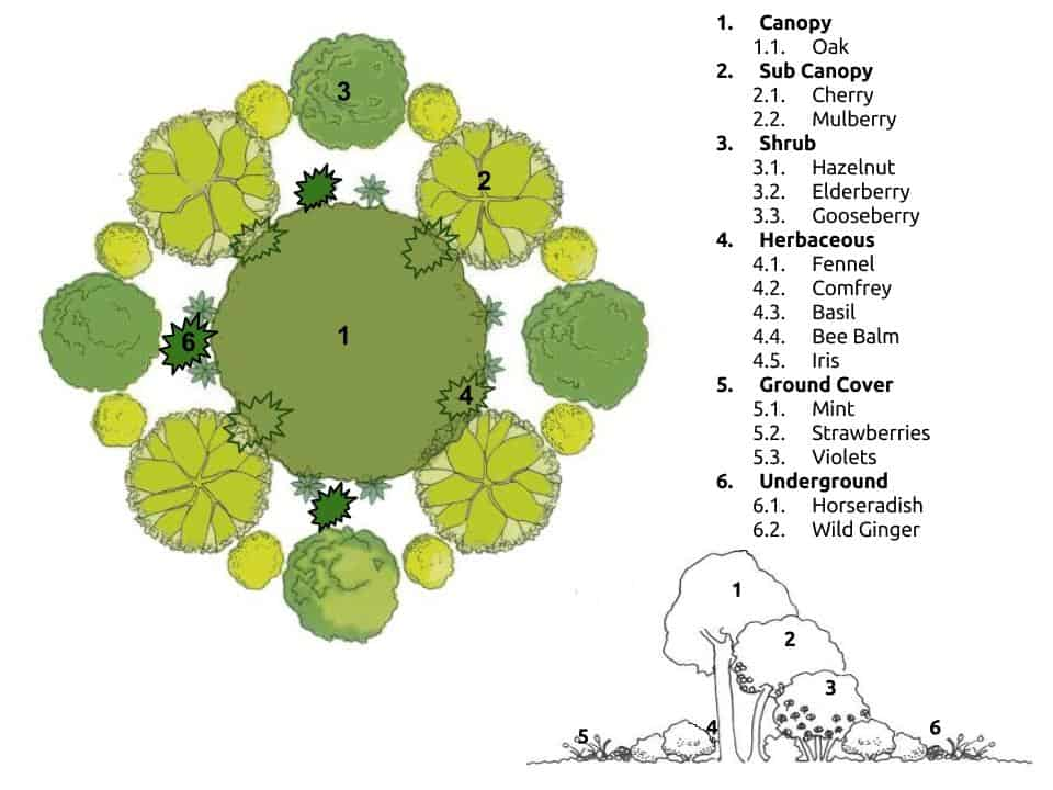 Permaculture Projects, Permaculture Garden Plans