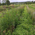 Herb Farm - Sacred Blossom