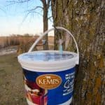 Maple Syrup - Tapping Trees