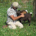 Wayne with Nigerian Dwarf goat babies